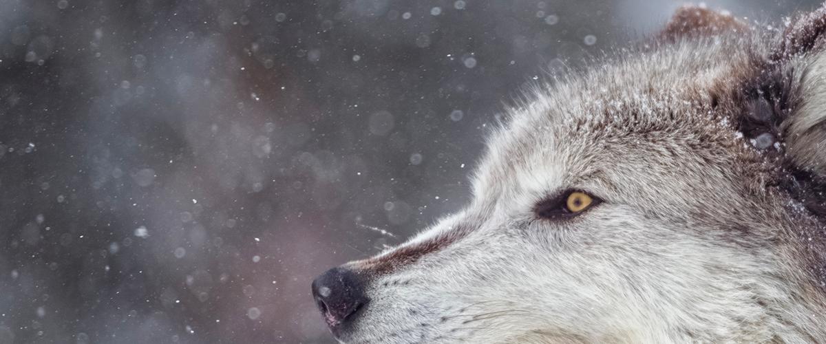 Le progressive profiling au secours du grand méchant loup